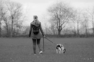 Mein Hund zieht an der Leine - Was hier falscg gemacht wird erfährst Du jetzt